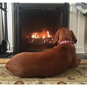 Собака лежит у открытого огня