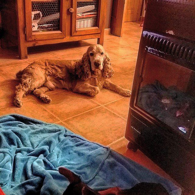 Собака лежит у печи