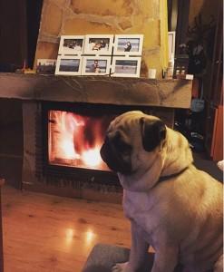Собака греется у камина